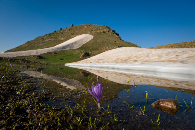 Avgo, Valia Kalda national park. Vovousa project. Ipiros. Greece. Europe. George Detsis. 06/2013.